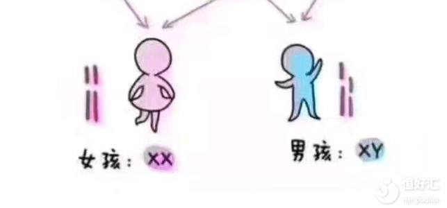 做广州试管婴儿真的能优先选择性别吗?