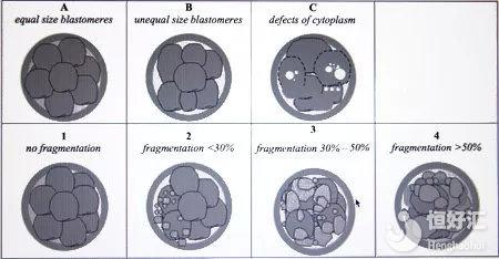 关于试管胚胎质量的划分,看这篇文章就够了!