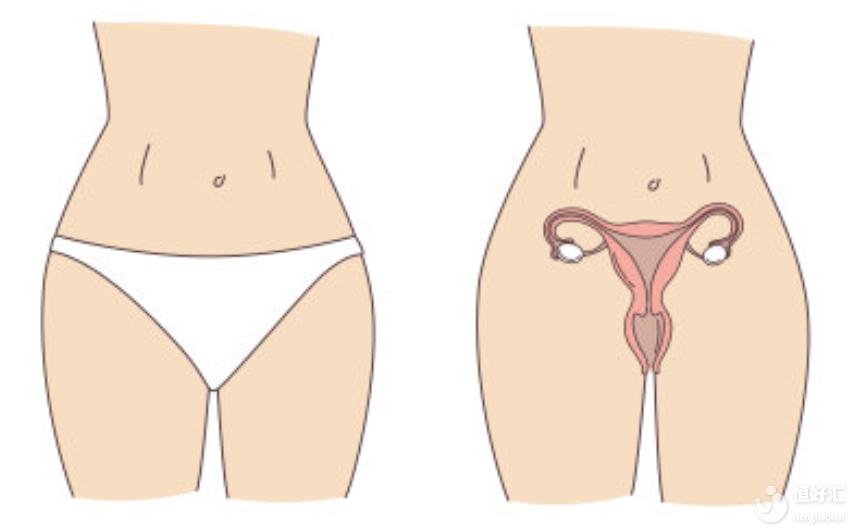 试管婴儿取卵前后千万别大意!小心发生卵巢扭转!