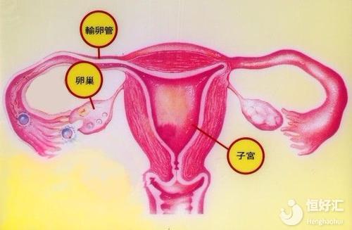 高龄问题导致子宫内膜异常?做好这几点有利怀孕