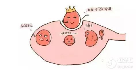 孕前请注意卵泡发育,或许它是你人生转折点
